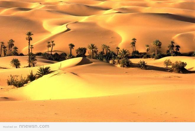 صحراء ثار معلومات عن صحراء ثار بالهند بالصور