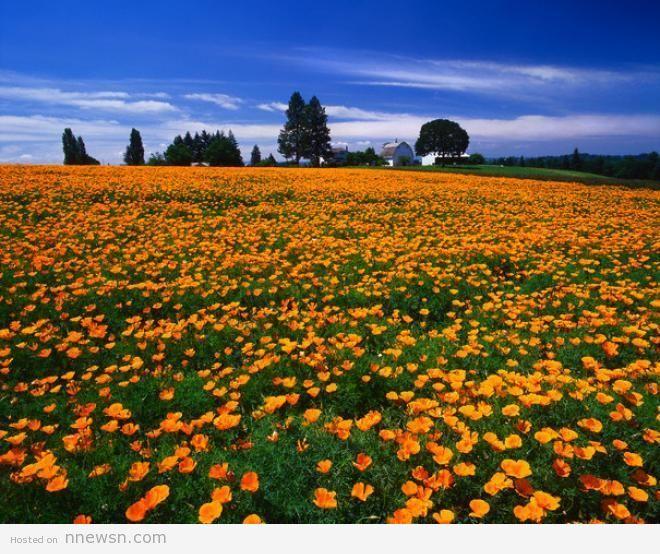 وادي الزهور الهند معلومات عن وادي الزهور في الهند بالصور