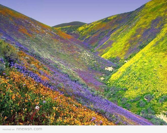 وادي الزهور في الهند معلومات عن وادي الزهور في الهند بالصور