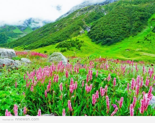 وادي الزهور معلومات عن وادي الزهور في الهند بالصور