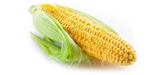 ذرة صفراء corn
