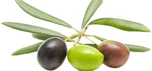 زيتون olive
