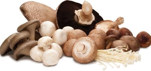 الفطر mushroom