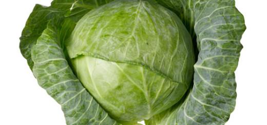 ملفوف cabbage