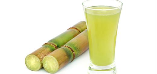 قصب السكر sugarcane