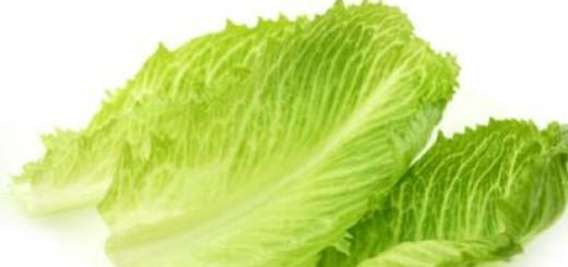 ورق خس بلدي lettuce